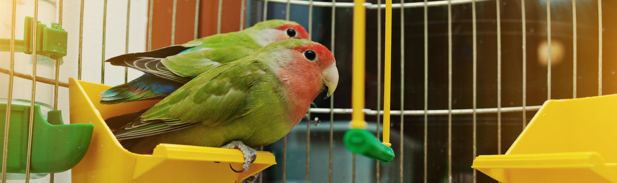 bird services